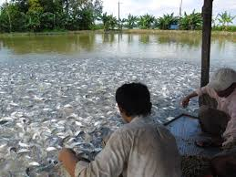 Image result for fish farming