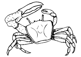 Small Picture Crab Coloring Pages Coloringpages1001com