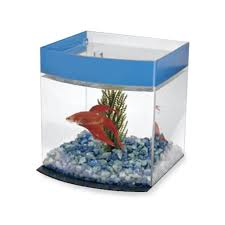 small screenshot 1 office fish. best 25 1 gallon fish tank ideas on pinterest tanks 3 and aquarium small screenshot office c