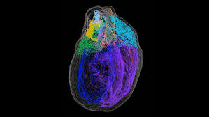 A new 3-D <b>map</b> illuminates the 'little brain' within the <b>heart</b> | Science ...