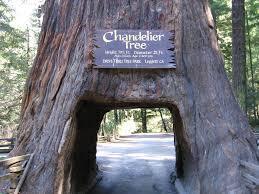 drive thru tree chandelier tree