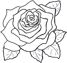 Easy To Draw Roses How To Draw An Open Rose Coloring Page Easy And Fun To Draw
