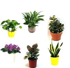 low maintenance office plants. Office Plants No Windows Best Good Awesome Desk Designs Style . Low Maintenance M