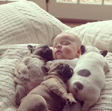 bulldog puppies sleeping. Contemporary Sleeping 10 Incredibly Important Photos Of A Baby Sleeping With French Bulldog  Puppies  With 10 On L