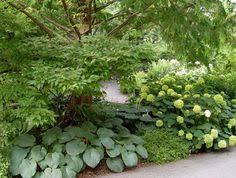 Small Picture Shade Gardens Gardens Garden ideas and Plants