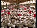 business plan in poultry