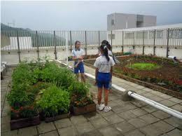 rooftop farming in a school in hong