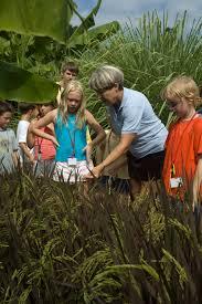homeschool in the garden school of fish