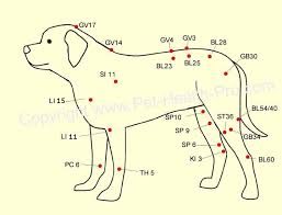 Canine Acupuncture Meridian Chart Dog Acupressure Points Canine Acupuncture Point Chart