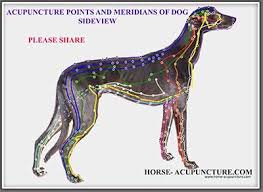 Canine Trigger Point Chart Canine Acupuncture Acupressure Points And Meridians Charts