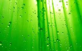 Green wallpaper ...