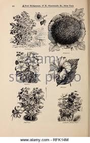 . Alfred Bridgeman seeds. Nursery stock, New York (State), New ...