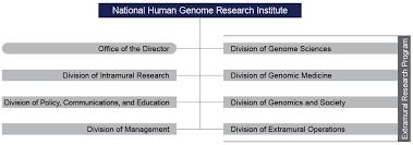 Nih Organizational Chart Organizational Structure Nhgri