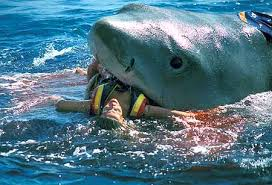 pictures of great white sharks eating people. Brilliant Pictures Great White Shark Eating Human  Eating A Man In Sea  Share Amazing  Vidz Throughout Pictures Of Sharks People