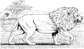 cfeabdeccecdca medium mountain lion coloring page
