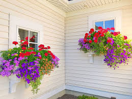 Flowers are the best expressions of feelings that aim to make special occasions like valentine's day, rose day, and mother's day extra special. 10 Sun Loving Flowers For The Ultimate Window Box Recipe Plaids And Poppies