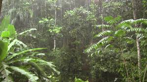 tropical rainforest raining. Exellent Tropical Rain Falling In The Amazon Stock Footage Video 100 Royaltyfree 373792   Shutterstock In Tropical Rainforest Raining T