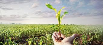 Image result for محصولات کشاورزی
