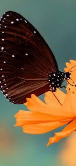 Flower Butterfly 4K Wallpaper #37