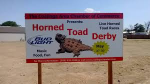 Image result for horned toad picture