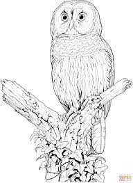 Perched Barred Owl Coloring Page From