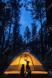 camping in the woods at night. Delighful Woods Silhouette Of A Cat And Dog In Camping Tent Under The Stars Woods Intended Camping In The Woods At Night M