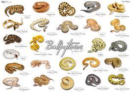 Ball Python Morph Chart 72 Unfolded Python Breeding Chart