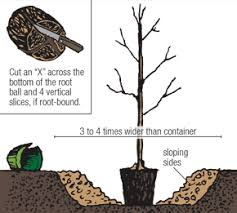 How Often Should I Water My Fruit Trees