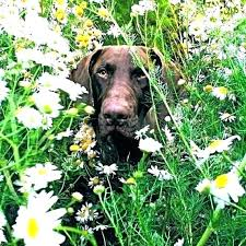 how to keep dogs out of flower beds yard what will off