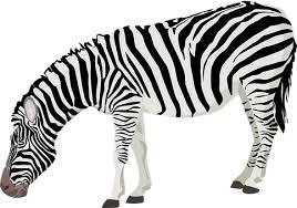 4,000+ Free Black White & White Illustrations - Pixabay