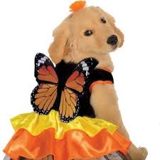 Rubies Dog Costume Size Chart Dog Costume Monarch Butterfly Medium