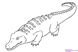Dessin De Coloriage Alligator Imprimer Cp00763