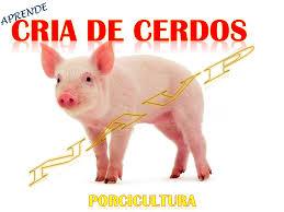 Hondureña Utiliza Facebook Para Vender Sus Cerdos  Diario La PrensaPrecio Granja De Cerdos Engorde