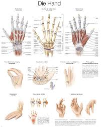 Hand pols