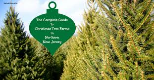 The Complete Guide To Christmas Tree Farms In Central Jersey Christmas Tree Cutting Nj