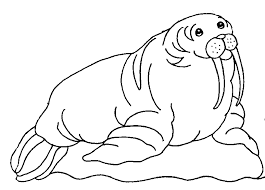 Small Picture Walrus coloring page Animals Town Animal color sheets Walrus