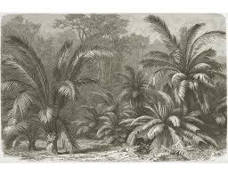 Palmvarens Of Cycadeeën Levende Fossielen Behang Op Maat
