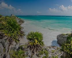 mexico beach with blue waters and palm trees