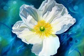 white poppy flower paintings fl paintings white flower