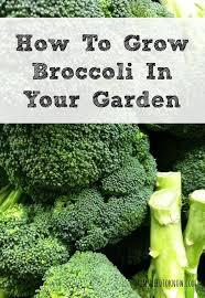best garden vegetables. 10 most popular vegetables to grow in containers best garden l