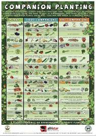 Vegetable Companion Planting Charts Beginners Companion Planting Resources For Gardening