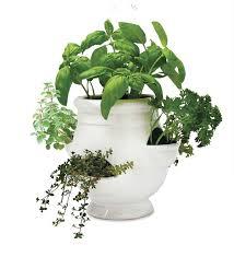 main image for windowsill herb garden kit
