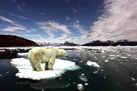 Реферат Последствия климатических изменений Гипермаркет знаний Глобальное потепление и климатические изменения несут негативные последствия для нашей природы и животного мира Ущерб от стихийных бедствий бьет по флоре и