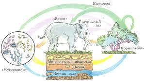 Организмы живые участники круговорота веществ растения  Схема деятельности живых организмов в круговороте веществ