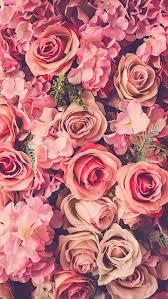 Roses Flowers Wallpapers Authentic Suburban Gourmet Wallpapers For My Phone Iphone