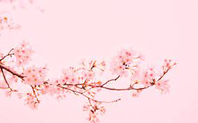 Flower Mac Wallpapers Free HD Download ...