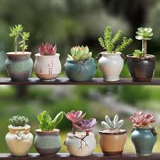 plant pot indoor ping for