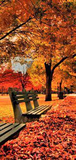 Autumn phone Wallpaper - EnJpg