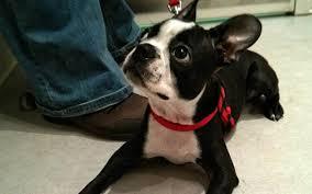 Is a <b>Dog Harness</b> Better Than a <b>Collar</b>? - BarkPost