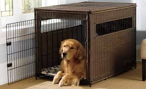 10 Best Dog Crates: Top Portable, Indoor, and Outdoor Options